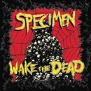 Wake The Dead thumbnail
