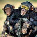 Monkey Swat thumbnail