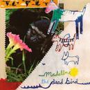 The Dead Bird Split thumbnail
