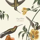 Sugarbird thumbnail