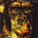 Dreaming Apes thumbnail