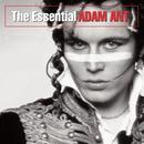 The Essential Adam Ant thumbnail