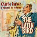 The Latin Bird thumbnail
