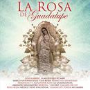 Rosa De Guadalupe thumbnail