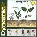 Photosynthesis thumbnail